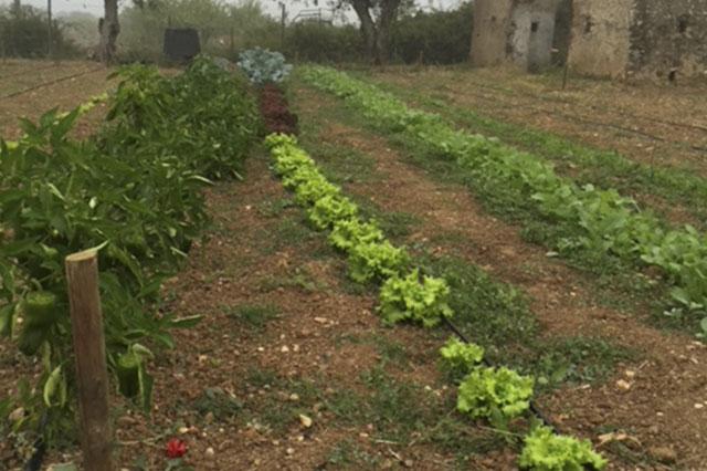 horta da roda agricultura